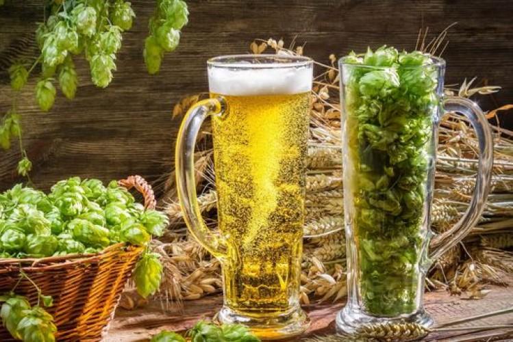 Охмеление пива. Как охмелить неохмеленный солодовый экстракт