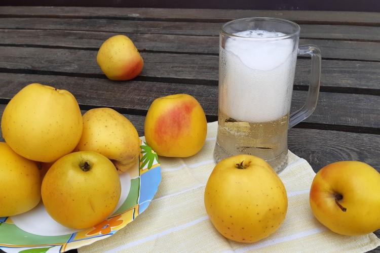 Сидр из магазинного яблочного сока. Удачный эксперимент.